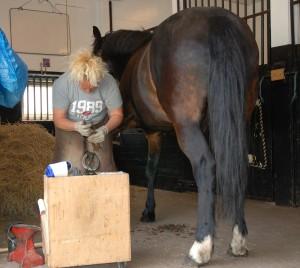 Hästarna får nya skor på gården